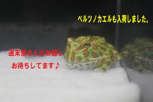IMG_8260