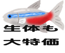 fish_neontetra