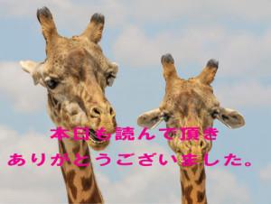giraffe-901009_960_720