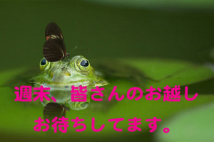 frog-540812_960_720