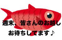 shinkai_kinmedai
