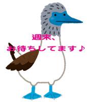 bird_aoashi_katsuodori