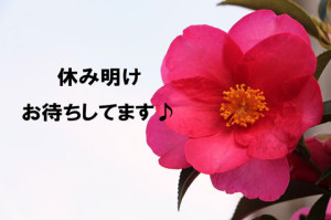rosa-1084695_960_720