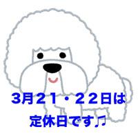 dog_Bichon_Frise