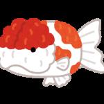 fish_kingyo_sakuranishiki
