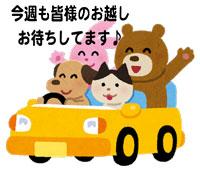 car_animals