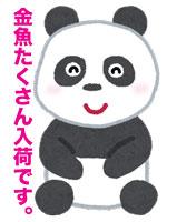 animal_panda